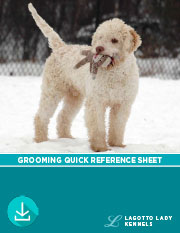 Lagotto Grooming Quick Reference