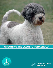 Lagotto Grooming Detailed with Photos