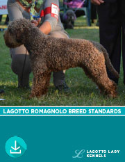 Lagotto Romagnolo Breed Standards